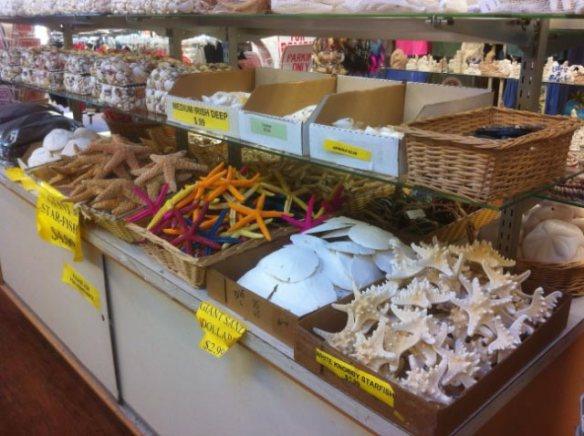 Dead 'sea life' in the tourist stores on Fisherman's Wharf, mostly echinodermata (spiny skinned)