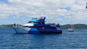 Day tours from Opua buzzed by